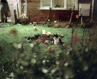 Liz Hingley: The Neighbour's Cat, from the series 'The Jones Family', 2012
